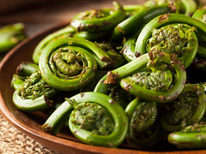 seasonal-fiddlehead-ferns.jpg